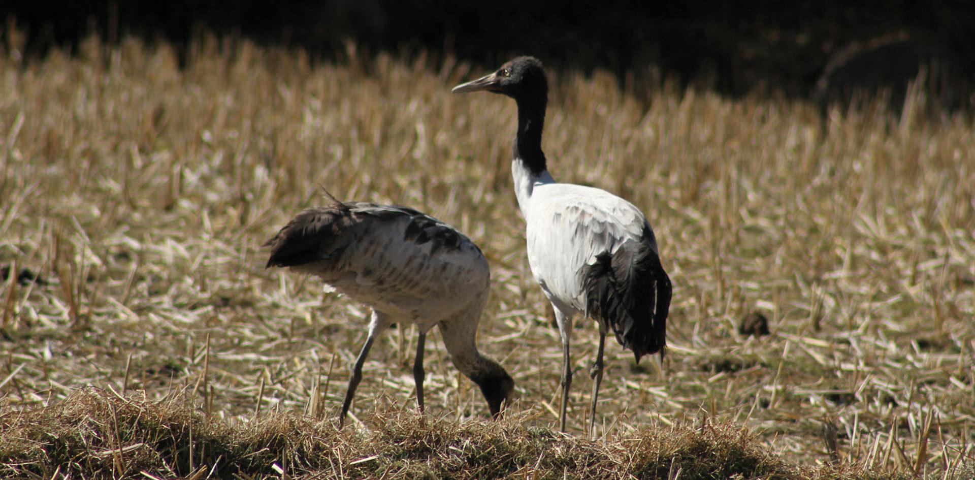 Bumdeling Wildlife Sanctuary