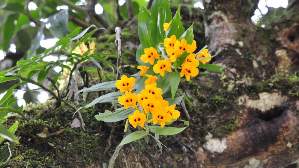flowers-in-bhutan